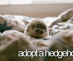 hedgehog, before i die, and adopt image