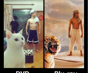 dvd, funny, and Life of Pi image