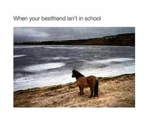 funny, horse, and school image