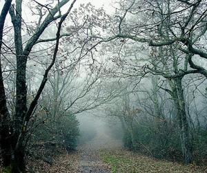 mist, woods, and trees image