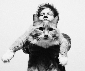 ed sheeran, cat, and black and white image