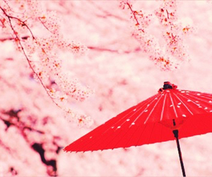 japan and cherry blossoms image