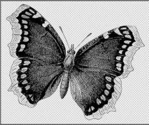 black, butterfly, and drawing image