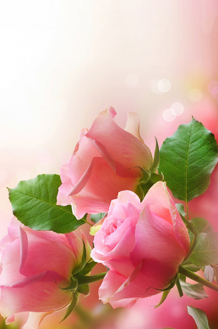 Pink Roses Flowers Iphone Hd Wallpaper On We Heart It