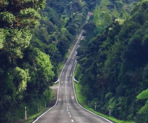 road, nature, and forest image