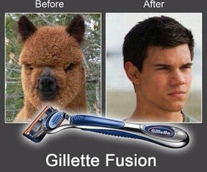 funny, lol, and Taylor Lautner image