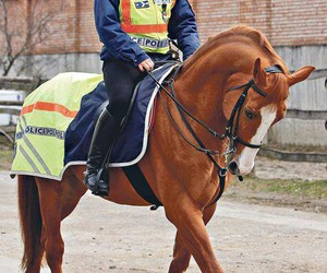 horse, police, and rendőr image