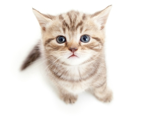 baby animals, kitten, and cats image