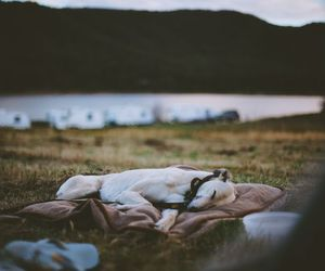 adventure, dog, and nature image