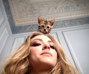 cat, amanda seyfried, and cute image