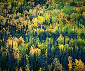 alaska, autumn, and earth image
