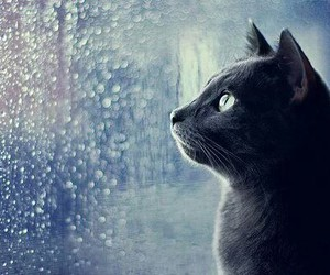 cat, rain, and black image