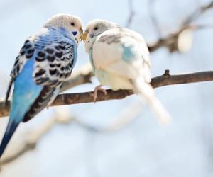bird, animal, and love image