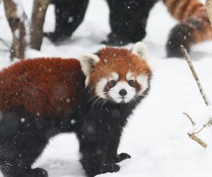 animals and snow image