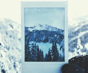 beautiful, polaroid, and trees image