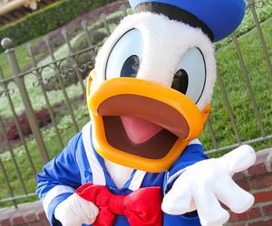 disney, donald, and donald duck image
