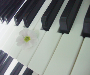 organ, flower, and music image