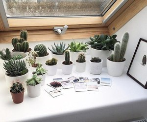 cactus, tumblr, and white image