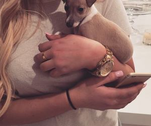 accessories, blonde, and dog image