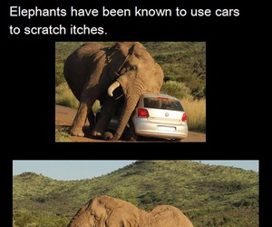 animals, cars, and elephants image