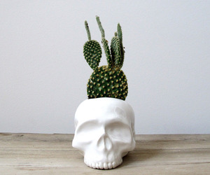 skull, cactus, and plants image