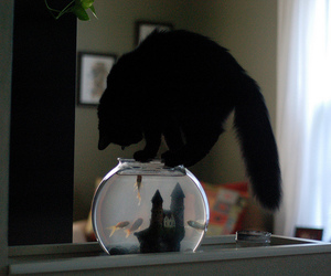 cat, fish, and animal image