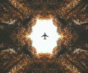 travel, plane, and tree image