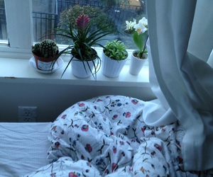 plants, pale, and bed image