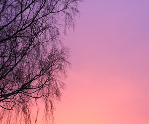 pink, purple, and silhouette image