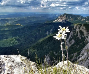 flowers, mountains, and edelweiss image