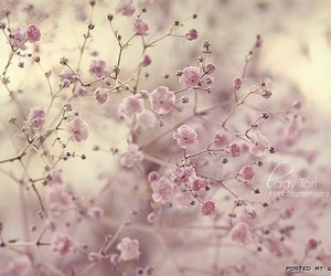 beauty, flower, and nature image