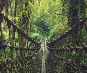 nature, green, and bridge image