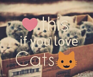 cat, heart, and love image
