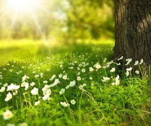 nature, flowers, and spring image