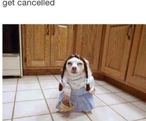 funny, outfit, and dog image