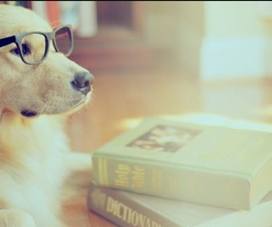 adorable, glasses, and learn image