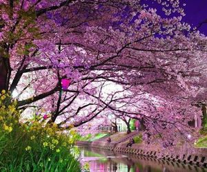 japan, nature, and pink image