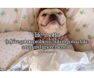 dog, funny, and life motto image