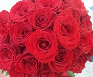 amazing, red, and roses image