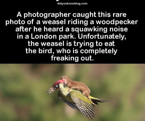 bird, fact, and funny image