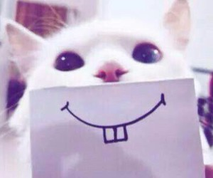 cat and smile image