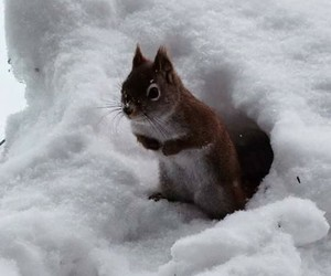 animals, Cutes, and snow image