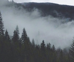forest, wallpaper, and fog image