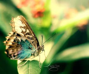 beautiful, butterflies, and nice image