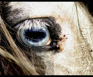 horse, white horse, and horse love image