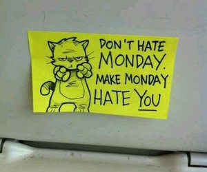 monday, cat, and funny image