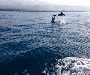 dolphins, sea, and water image