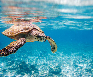 sea, turtle, and water image