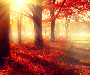autumn, red, and leaves image