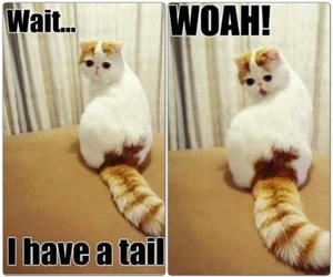 cat, cool, and funny image